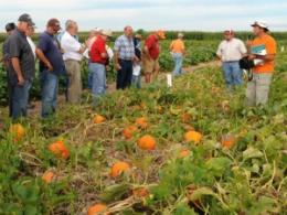 Aug. 18 Pumpkin Field Day Tackles Disease, New Varieties, Use of Drone Technology